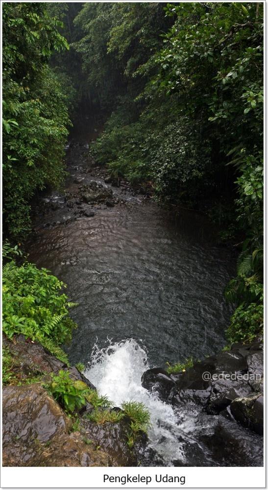 Pengekelep Udang Lombok