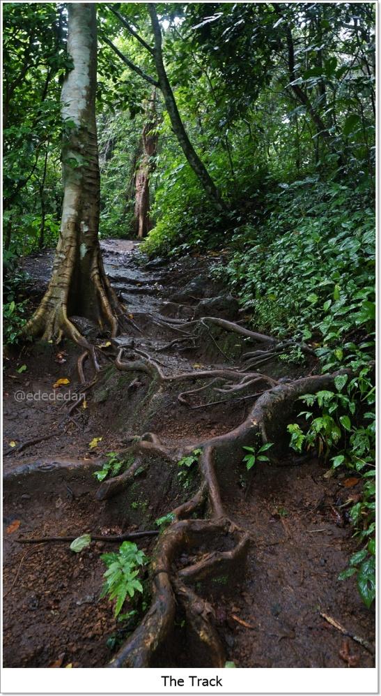 track to Benang Kelambu waterfall lombok