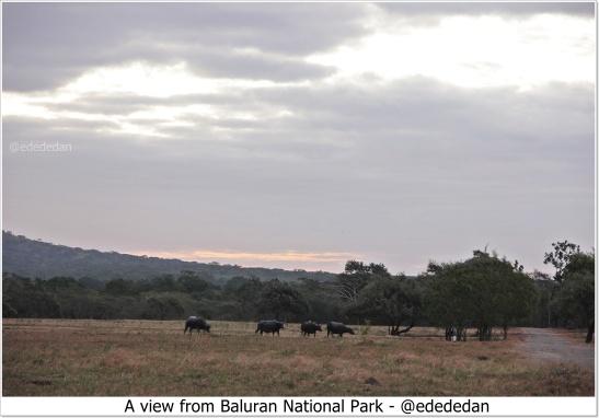 blog baluran wild life.JPG
