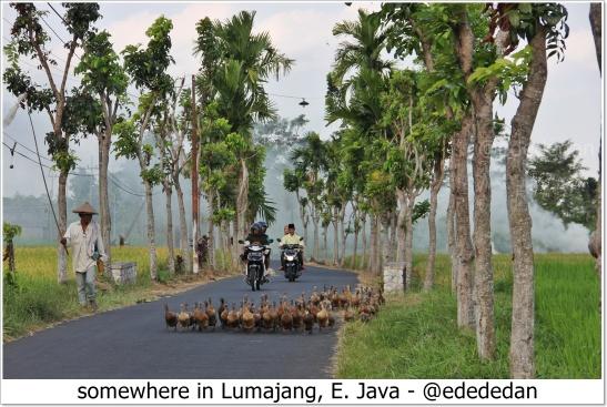 blog lumajang.JPG