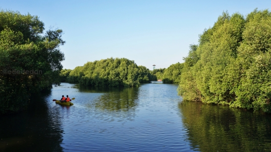 mangrove pik 1