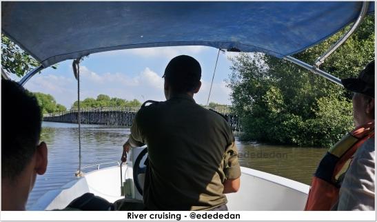 mangrove pik 5