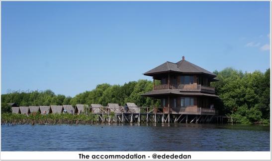 mangrove pik 6